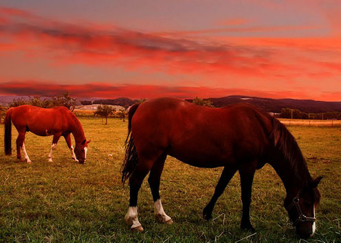Red Sky and Horses