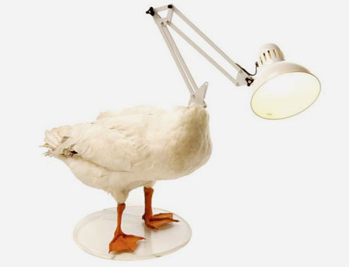 Decapitated Fowl Lamp