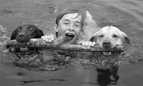 Boy Swimming with Dogs