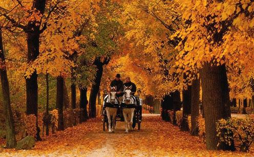 Beautiful Autumn Road