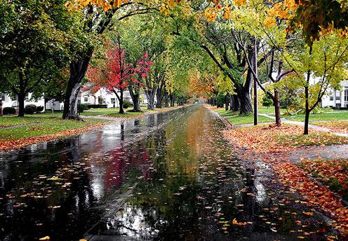 Wet Road after Rain