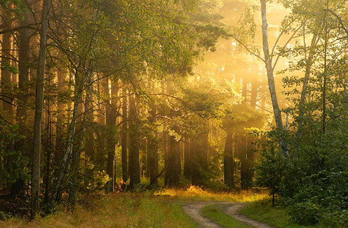 Picture of Beautiful Forest Road