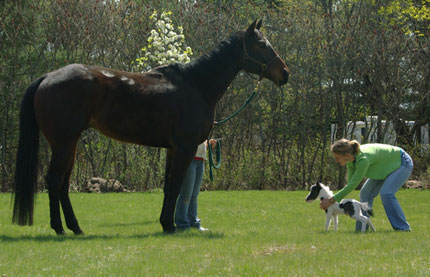 The World's Smallest Horse