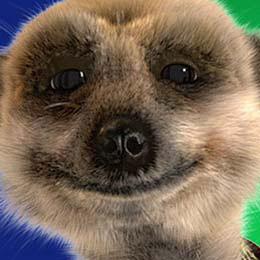 Russian meerkat Aleksandr Orlov