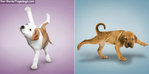 Yoga dogs and cats from Dan Borris