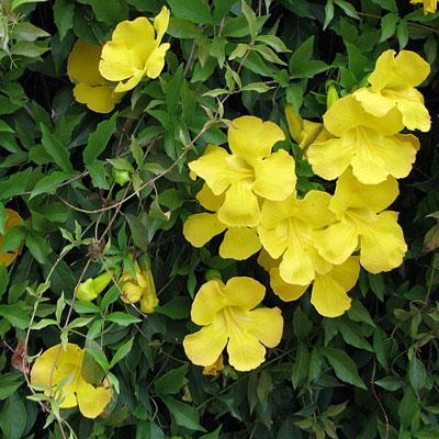 Tropical flower against wrinkles