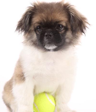 Dog with yellow ball