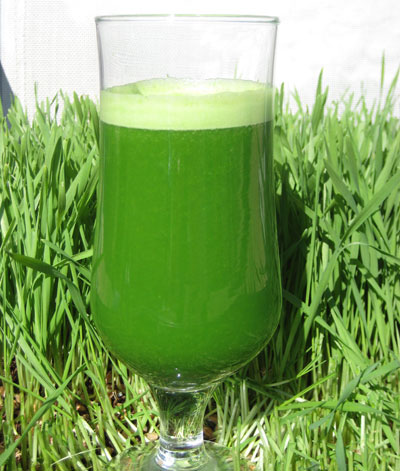 Fresh wheat grass juice