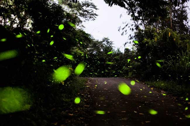 fireflies-354