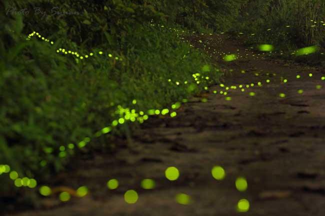 fireflies-54555