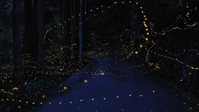 fireflies-67