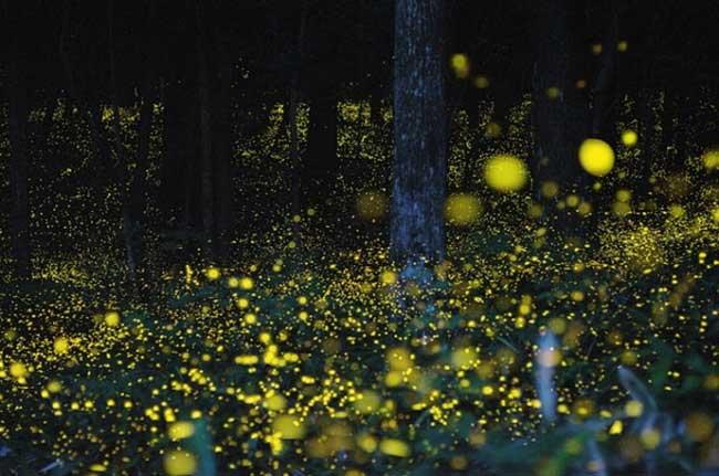 fireflies-9