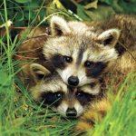 animals-love