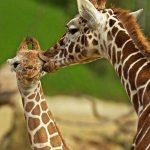 animals-love5