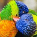 animals-love8