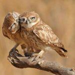 animals-love9