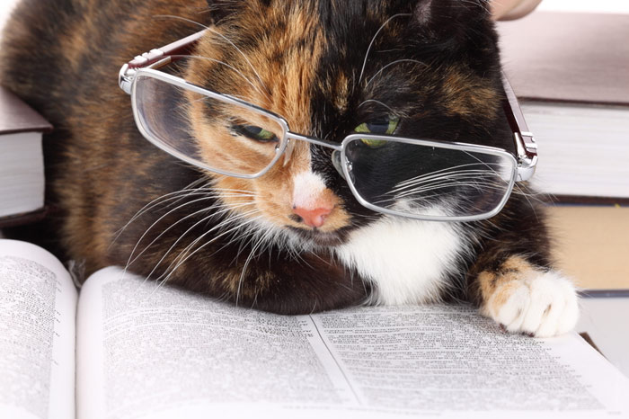 700-cat-smart-eyeglasses-reading-book-pet-intelligent