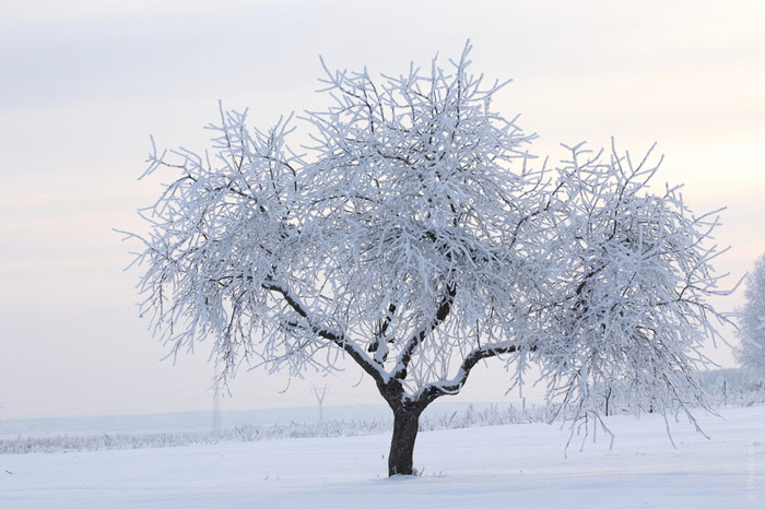 700-cold-winter-snow-tree-