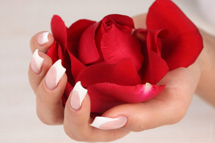 flower-beauty-manicure-nails-nail-art-french-manicure-rose-hand-woman-female
