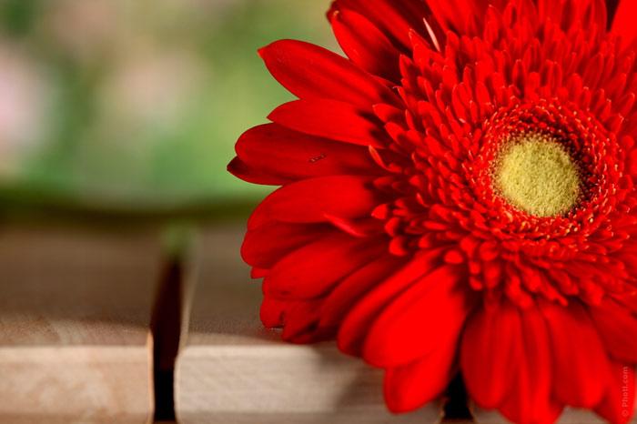 700-flower-spring-life-change