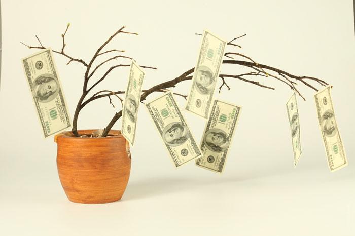 700-money-tree-dollars