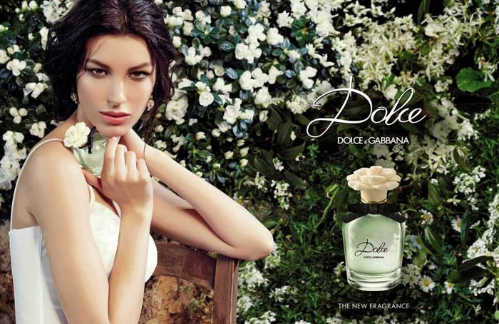 dolce-