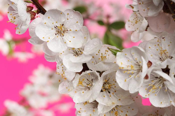 700-flowers-spring-love