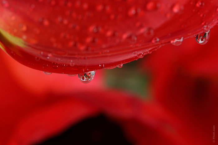 700-flower-red-rose-love-relationship-beauty