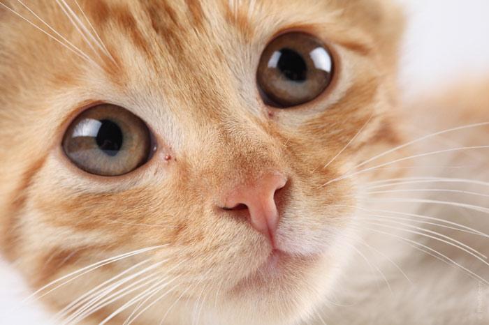 700-cat-pet-eyes-cute-animal