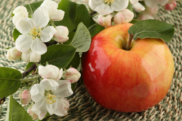 700-apple-flowers-food-diet