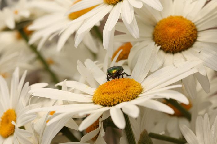 700-bug-flower