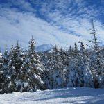 winter-(2)