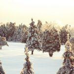 winter343