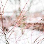 winter68568
