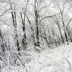 winter777