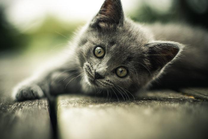 cat579