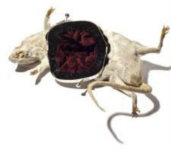 mouse-accessory-rat