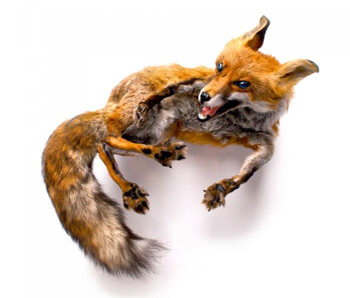 reid-peppard-fox-stole-700x700