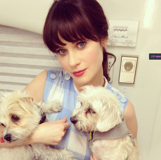 zooey-dechanel-dog