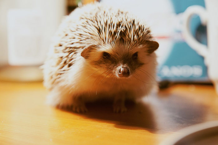 cafes-catering-hedgehogs